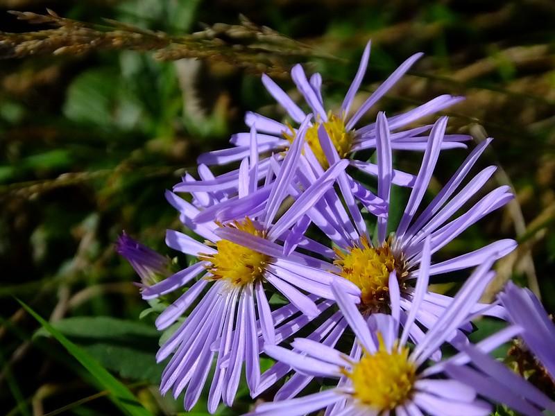 Native Plants at Yard n' Garden Land